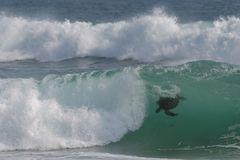 Surfing Turtle