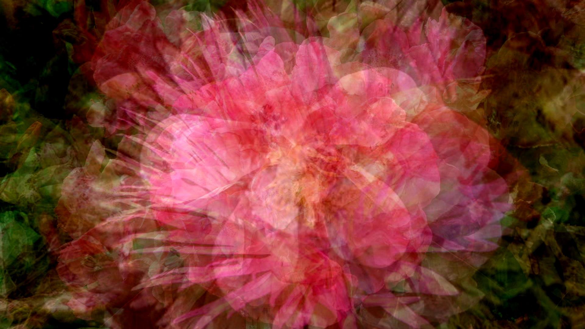 Surimpression de fleurs