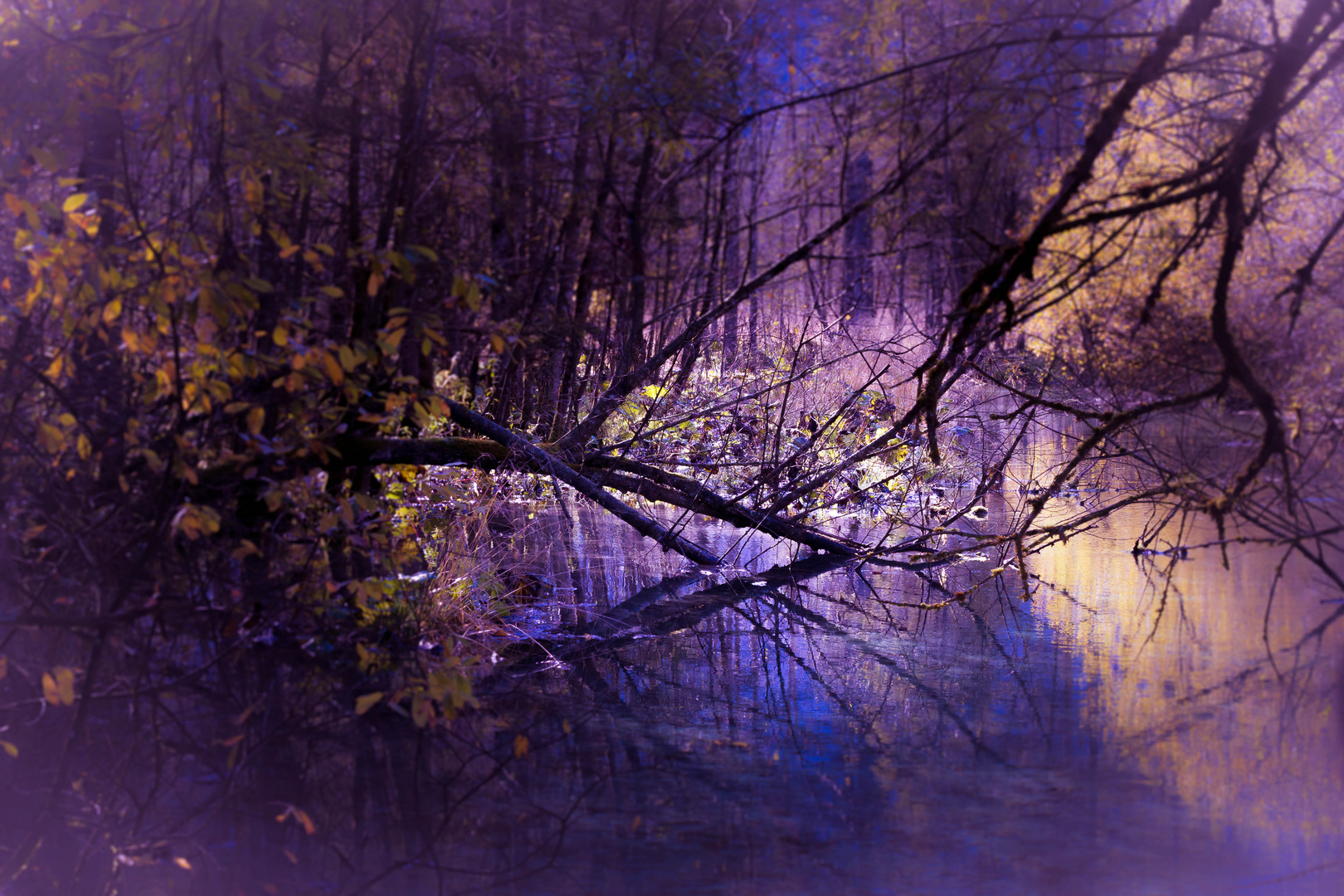 surreal nature