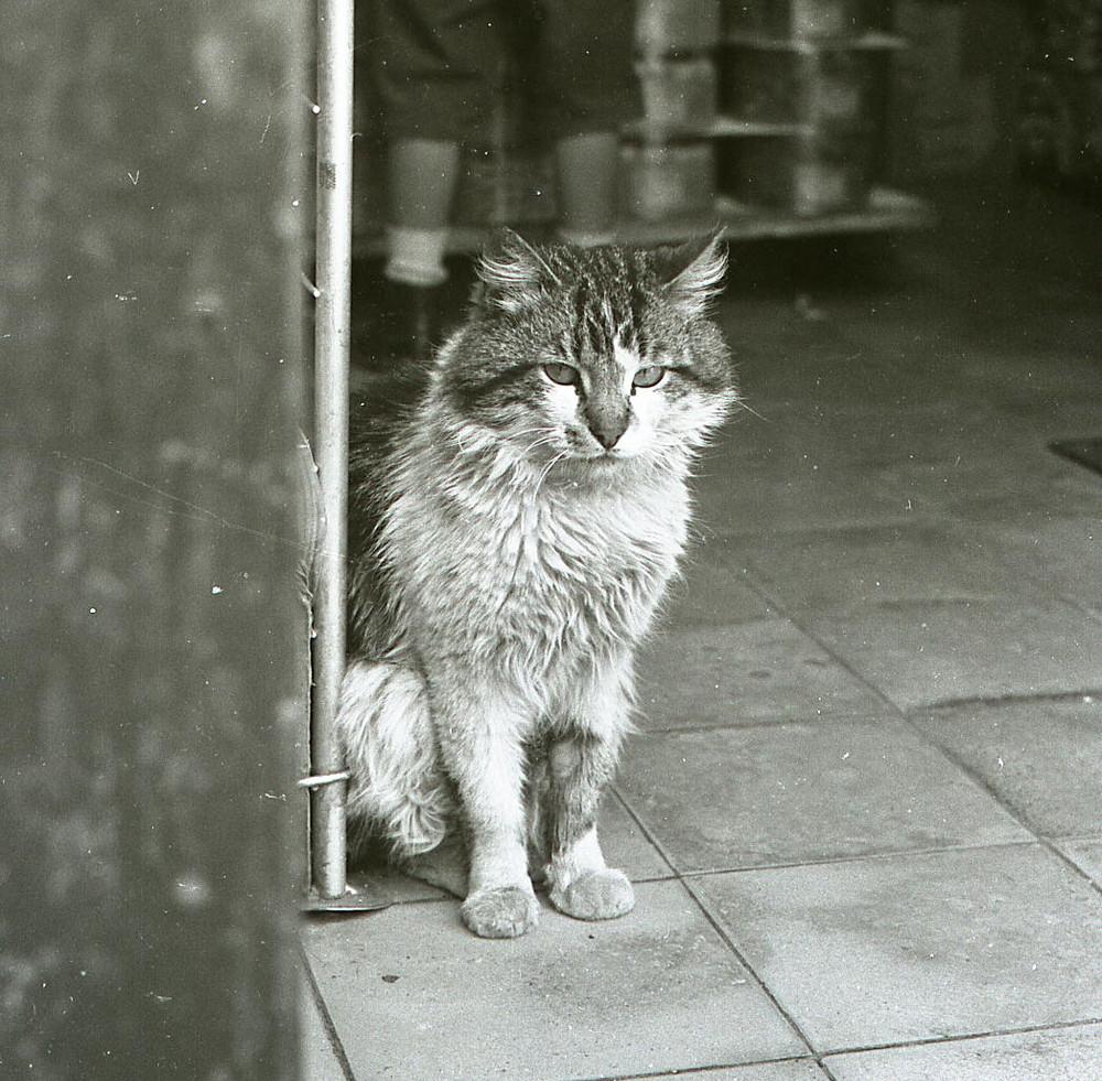 Surveillance cat