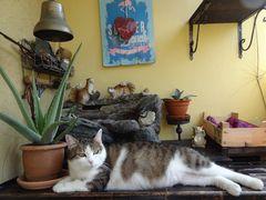 Susi am Balkon kurz vor ihren Nachmittagsschläfchen