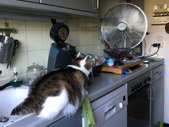 Susi bewundert unseren großen Ventilator