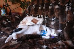 Susi ist müde vom spielen