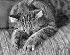 Susi ist schon im Winterschlaf !!!
