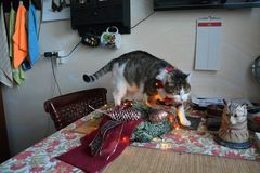 Susi ist schon in Adventsstimmung