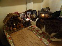 Susi ist schon in Weihnachtsstimmung