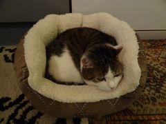 Susi mußte natürlich Freddyopa`s neues Bettchen auch ausprobieren.