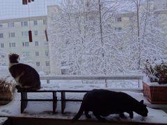 Susi und Muffin bei der Schneekontrolle