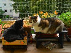 Susi und Muffin