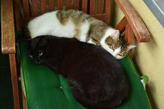 Susi und Muffin trösten sich gegenseitig