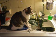 Susi unsere Blumenversteherin