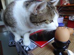 Susi wartet auf ihr Frühstücksei.
