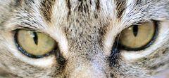 Susis eyes