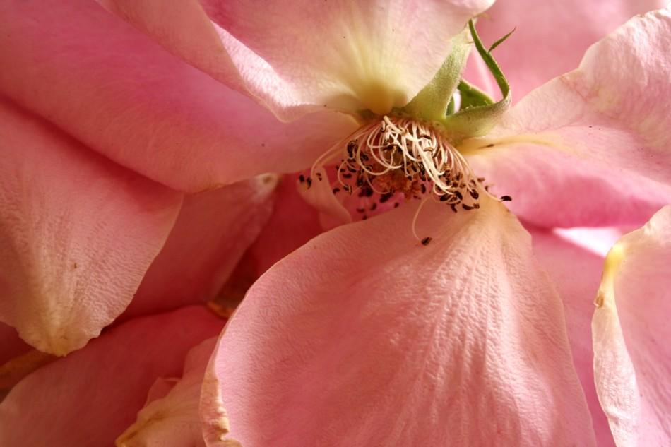 Sutileza en rosa