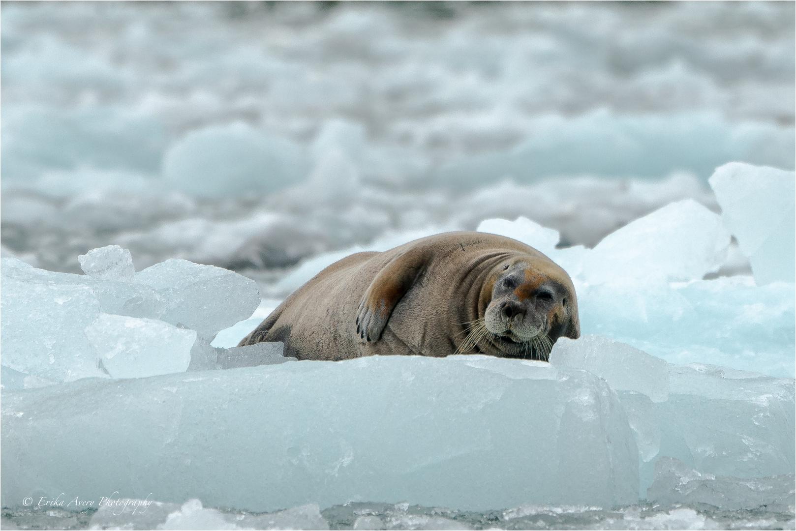 Svalbard - Leben auf dem Eis