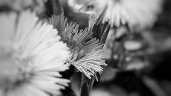 sw-flowers...