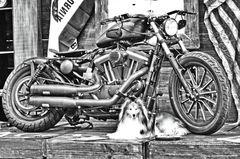 S/W Harley Davidson mit Sheltie Tjure