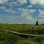Swamp hike (1)