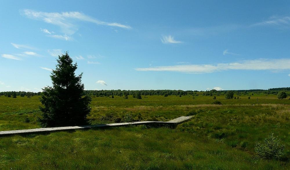 Swamp Hike (11)