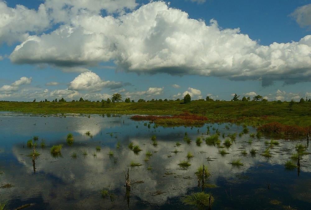 Swamp hike (12)
