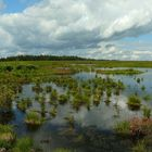 Swamp hike (13)