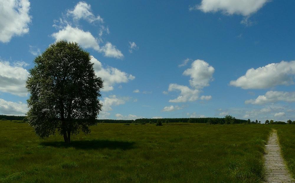 Swamp hike (15)