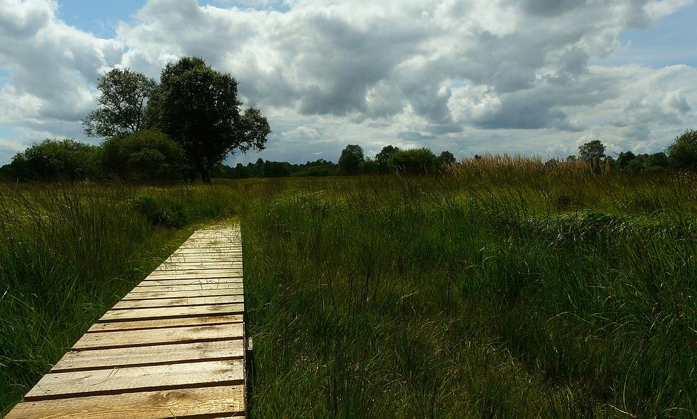 Swamp hike (16)