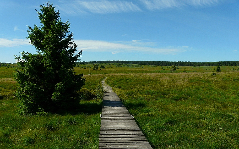 Swamp hike (2)