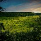 Swamp hike (32) : Sunrise over the 'Bergervenn'