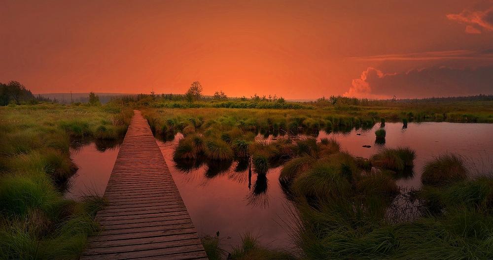 Swamp hike (36) : Brackvenn