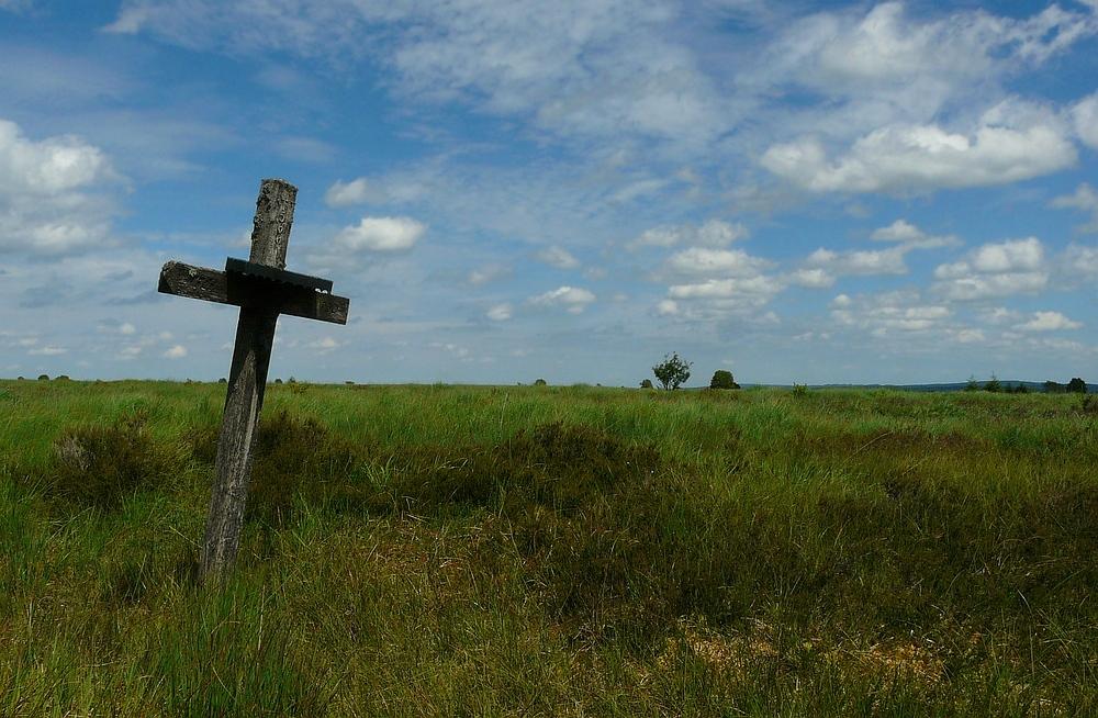 Swamp hike (6)