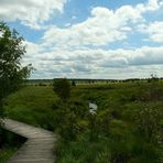 Swamp hike (7)