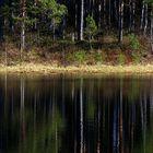 Swamp Keressaare