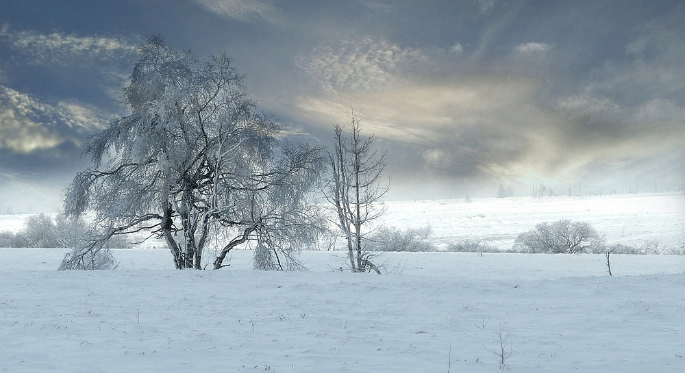 Swamp of ice and snow (14)