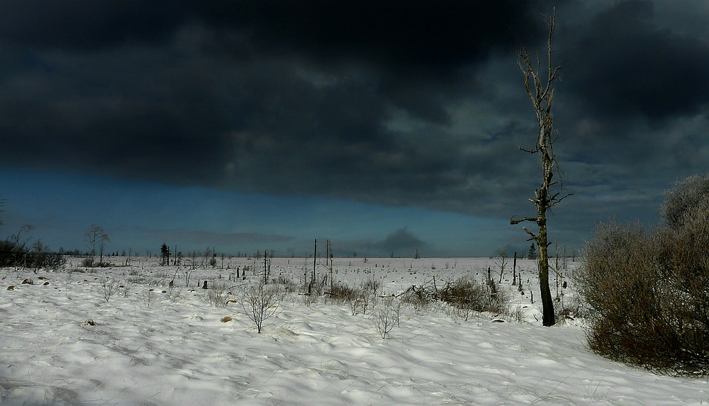 Swamp of ice and snow (20)