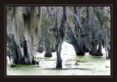 ..swamps ....
