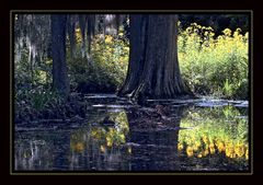 swamps # 3
