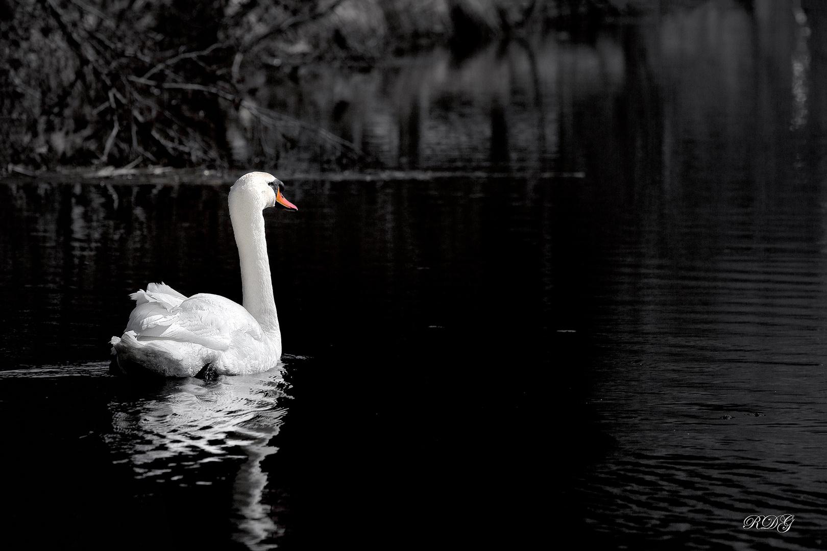 Swan ...