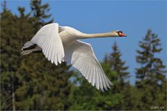 Swan Airlines