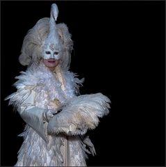 swan in the dark