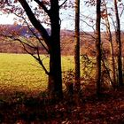 sweet autumn in november