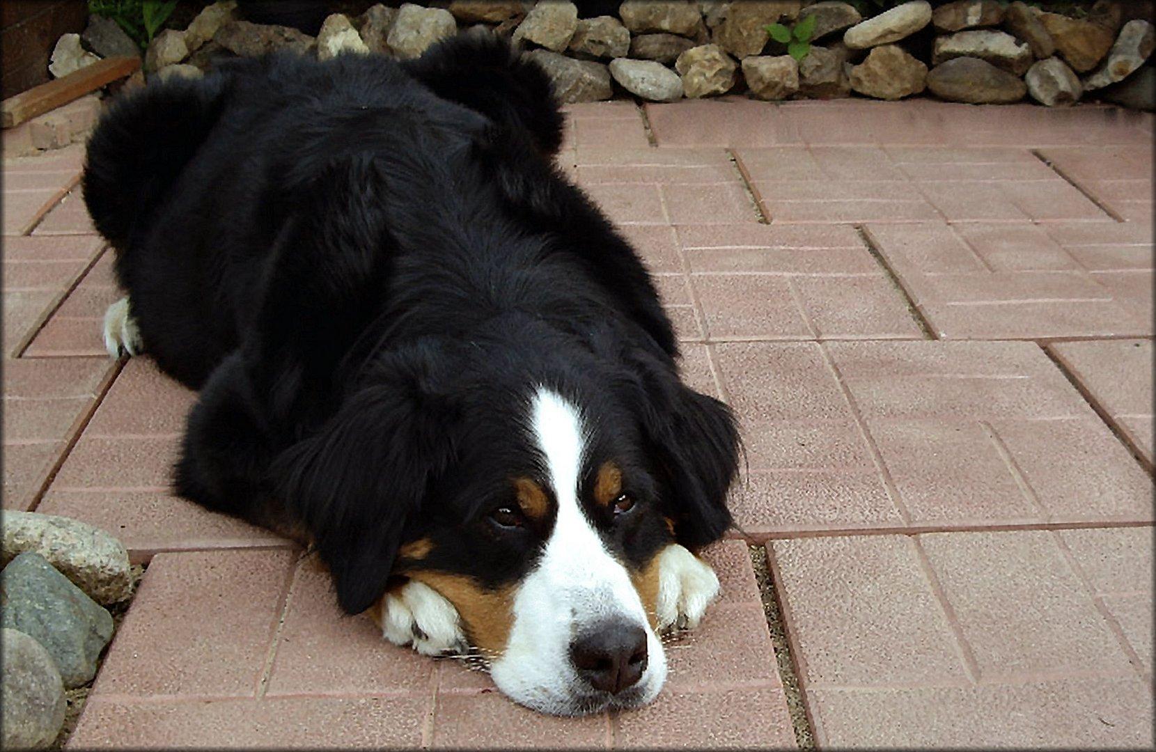 Sweet dog friend of mine.