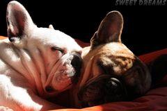 °°° sweet dreams °°°