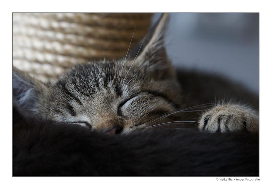 Sweet Dreams Kitti