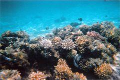 Swimming Through the Egyptian Reef