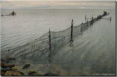 SYLT Stellnetz- und Reusenfischerei im Watt