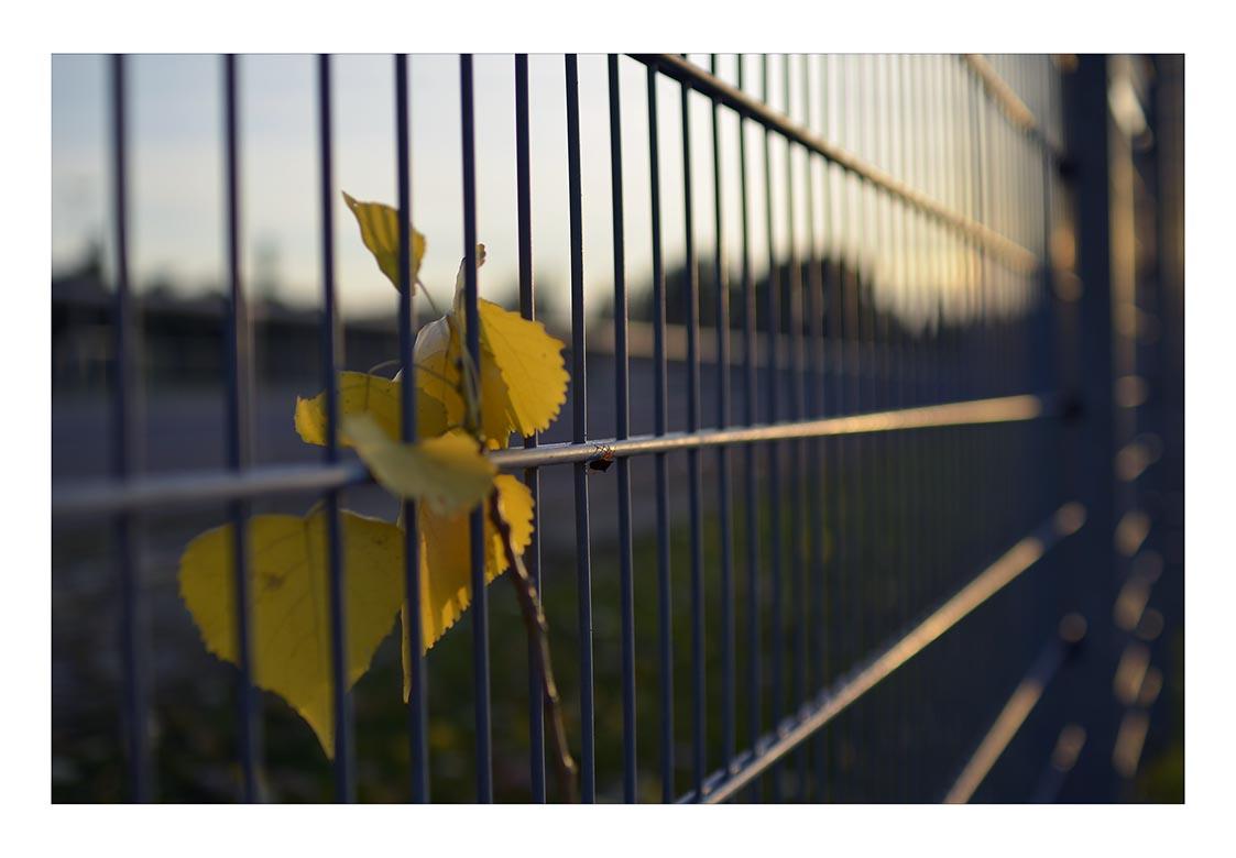 ...symbolisch...Herbst !