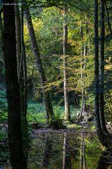 Symetrie des Waldes