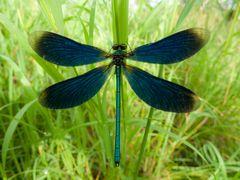 Symmetrie blau
