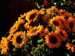 Symphonie der Sonnen